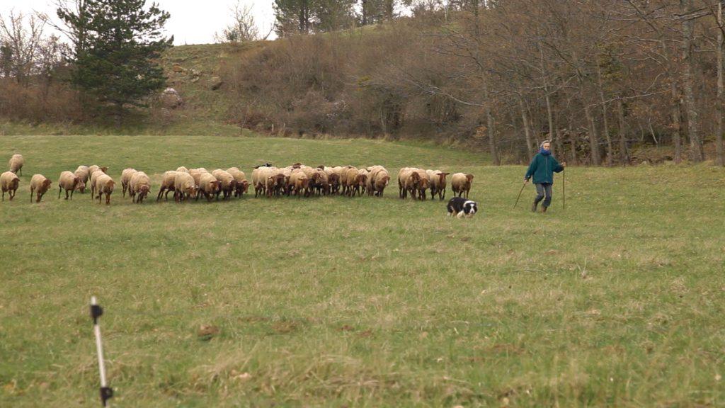 Jessie Fiske Darlington avec un troupeau de Guirra